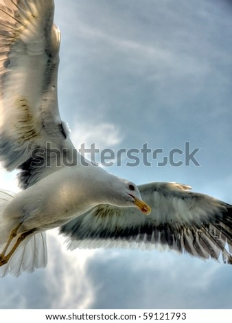 HDR of a Flying Seagull - stock photo