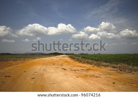 HDR photo of a dirt road in a sugar cane field - stock photo