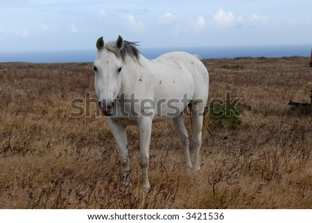 HDR photo of white horse on the meadow