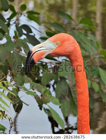 stock-photo-head-and-neck-of-a-pink-flamingo-282638675.jpg