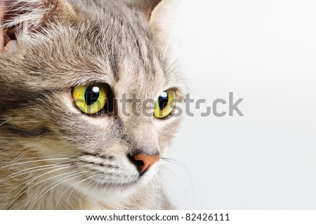head cat close up on a white background