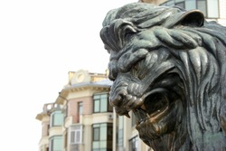 head of a bronze lion. bronze sculpture of a roaring lion on the monument in Poltava, Ukraine