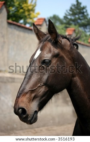 Head of a brown horse - stock photo