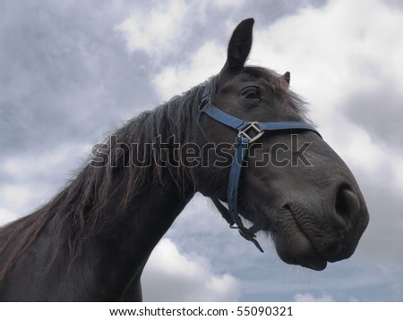 Head of a Friesian horse against the sky