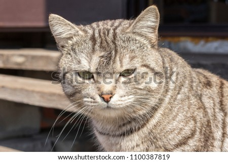 Head of a gray cat on the street, blurred background. Close-up