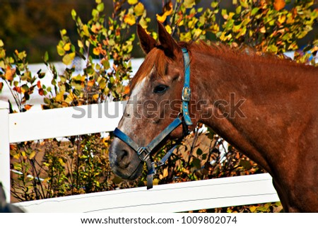 Head of a horse. #1009802074
