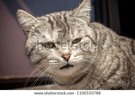 Head of a sad cat on the street, blurred background. Close-up