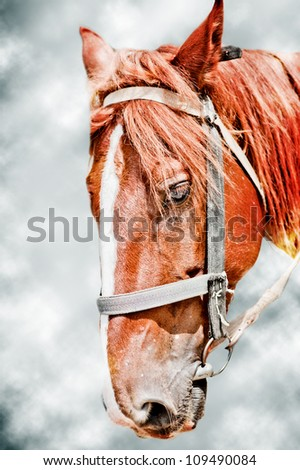 Head of brown horse on gray background