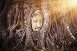 Head of Buddha statue in the tree roots at Wat Mahathat (Temple of the great relics and the world heritage), Ayutthaya, Thailand. - Image