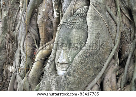head of  buddha statue in tree at Ayutthaya, Thailand.