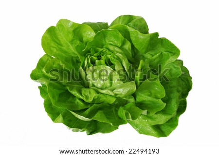 head of green fresh lettuce isolated over white