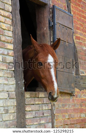 head of horse in its box