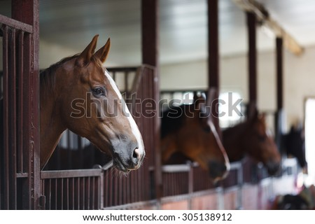 Head of horse looking over the stable doors on the background of other horses Photo stock ©