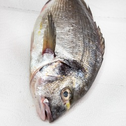 head of raw gilt-head sea bream (Sparus aurata, Orata, Dorada) on white paper towel