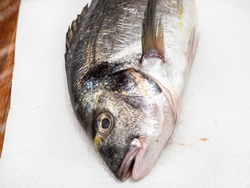 head of raw gilt-head sea bream (Sparus aurata, Orata, Dorada) on white paper towel on wooden table covered with plastic wrap