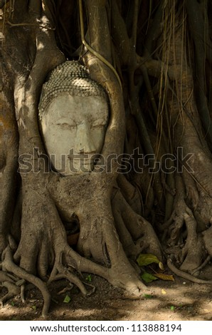 head of sand stone buddha in a tree in Ayutthaya, Thailand
