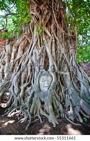 Head of Sandstone Buddha at Ayutthaya.Thailand.
