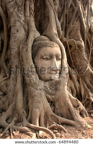 Head of Sandstone Buddha at Ayutthaya , Thailand
