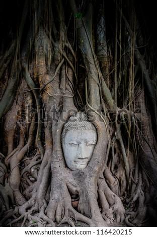 Head of Sandstone Buddha overgrown by Banyan Tree, Ayutthaya historical park, Thailand. - stock photo