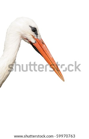 Head of white stork isolated on white, this bird is a symbol of Strasbourg