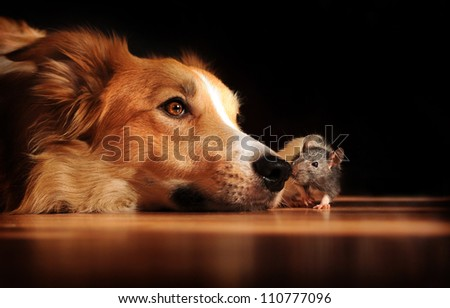 Head portrait of dog lying on flat surface with mouse crawling near. Concept shows friendship between species.