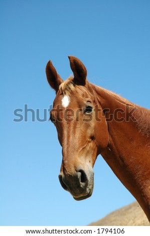 Head-shot of a beautiful chestnut stallion against a blue sky