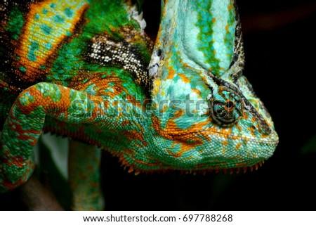 Head shot of a chameleon #697788268