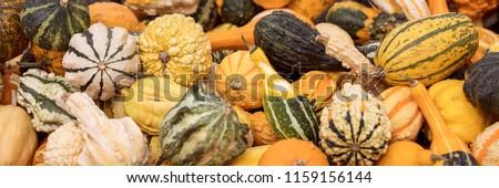 Header mit vielen kleinen Zierkürbissen für Dekoration im Herbst Stok fotoğraf ©