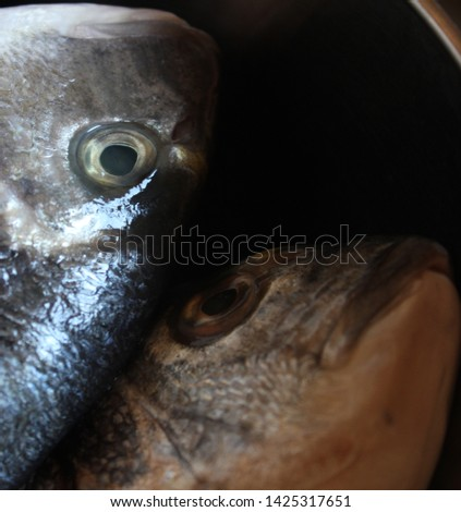 heads of freshly caught sea bream