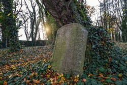 headstone leaning at a tree