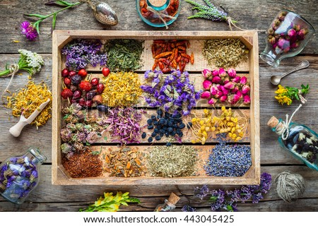 Healing herbs in wooden box on table, herbal medicine, top view. Flat lay. #443045425