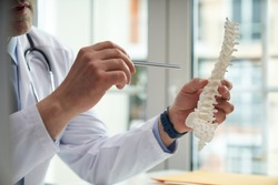 Healthcare worker holding a model of a human spine pointing to one of its segments with a metal stick