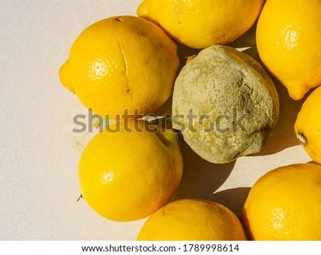 Healthy and green moldy lemon citrus fruits. Rotten fungi food. Foto stock ©