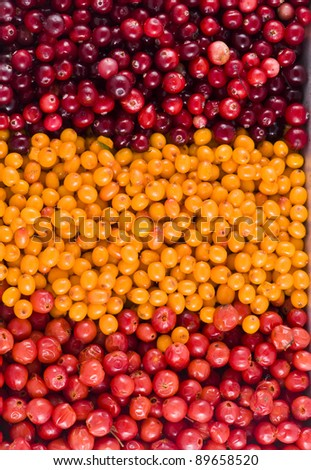 Healthy berries- cranberry, sea buckthorn berries and dog rose