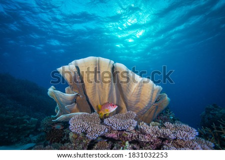 Healthy, colorful corals and fish on the Reef Photo stock ©