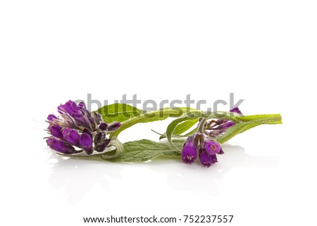 healthy comfrey flower with...