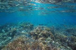 Healthy coral reef below water surface, underwater seascape, south Pacific ocean, Oceania