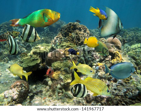 Healthy coral reef with colorful tropical fish, Caribbean sea