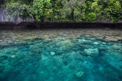 Healthy corals thrive in the shallows along the edge of a limestone island in Palau's lagoon. Palau is known for its amazing Rock Islands, ancient reefs uplifted out of the sea over 30 mya.
