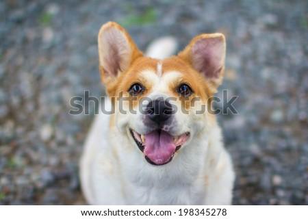 healthy dog smiling