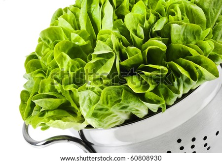Healthy fresh butter lettuce in a strainer on a white background with copy space