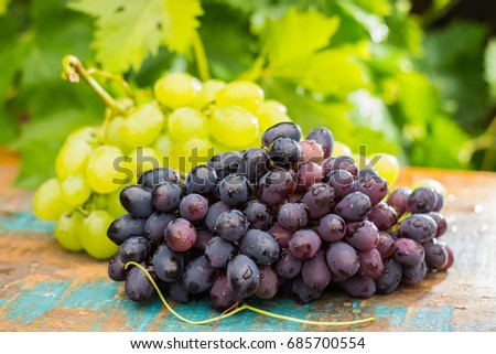 Healthy fruits Red and White wine grapes in the vineyard, dark grapes/ blue grapes/wine grapes,  bunch of grapes on the wooden table ready to eat, sunny day outside