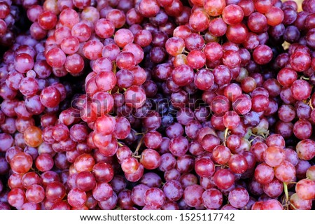 Healthy fruits Red wine grapes background/ dark grapes/ blue grapes/wine grapes,Red wine grapes background/dark grapes,blue grapes,Red Grape in a supermarket local market bunch of grapes ready to eat #1525117742