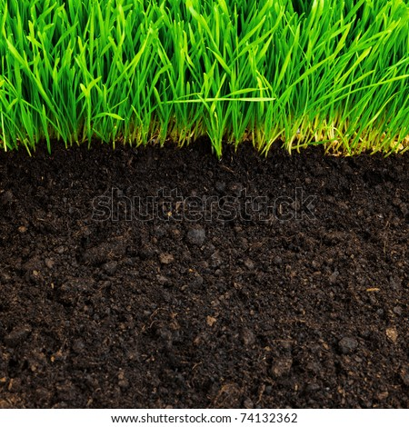 stock photo : healthy grass and soil pattern