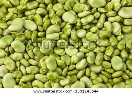healthy green broad beans background