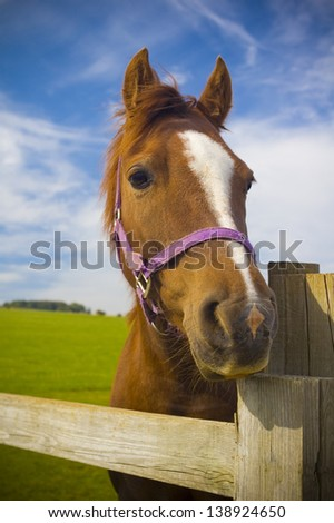 Healthy horse staring directly at the camera, sharp focus on the eyes.