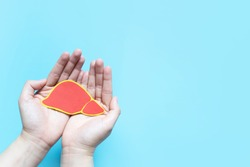 Healthy liver. Human hand holding liver symbol on light blue background with copy space. Health care and medical concept.