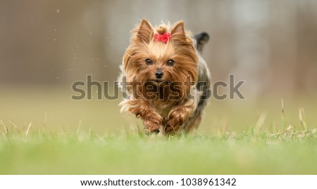 Healthy purebred dog photographed outdoors in the nature on a sunny day. #1038961342