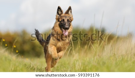 healthy purebred dog...
