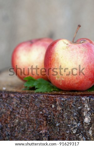 Healthy Self Grown Organic Apples on a wooden stump with tree bark texture.